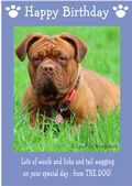 "Dogue de Bordeaux-Happy Birthday - ""From The Dog"" Theme"